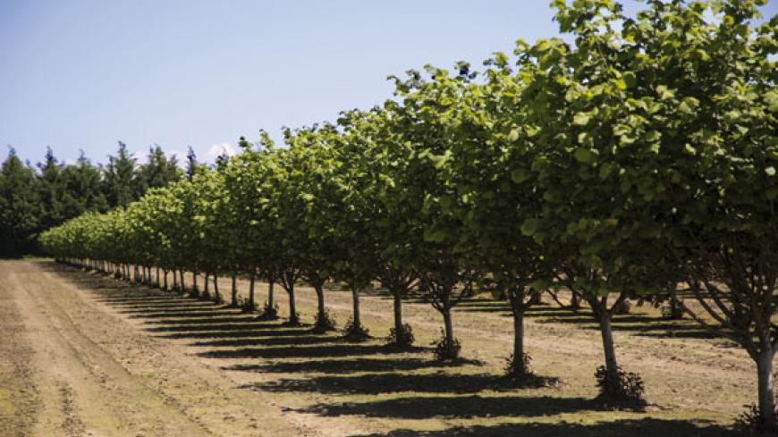 THROUGHOUT FRANCE AS A WHOLE, MORE THAN 60% OF WALNUT ORCHARDS ARE STILL NOT IRRIGATED. AND AMONG THE ORCHARDS THAT ARE IRRIGATED, BARELY A THIRD OF THEM ARE EQUIPPED WITH MICRO-IRRIGATION SYSTEMS.