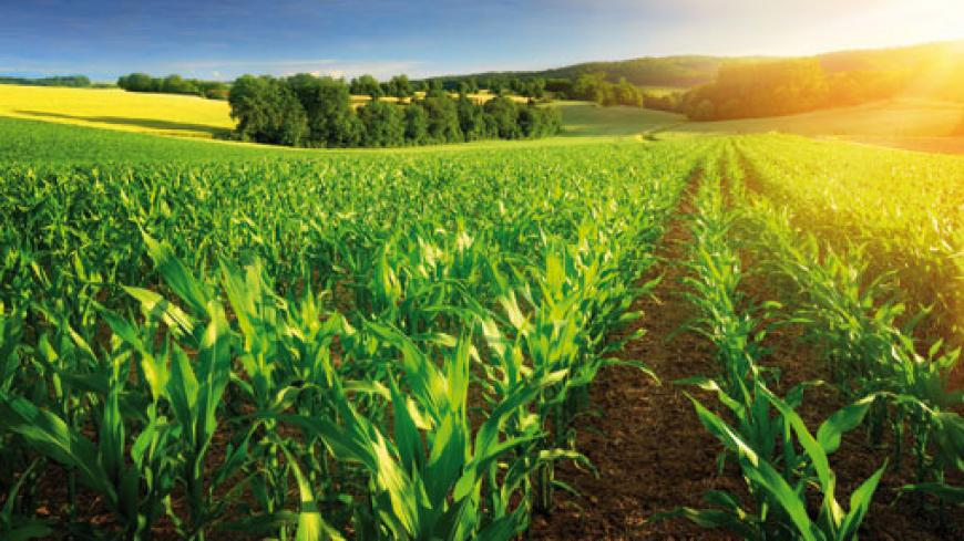 The farmer should be particulary vigilant during the flower or covb development stage and the pollinisation or silking stage that follows
