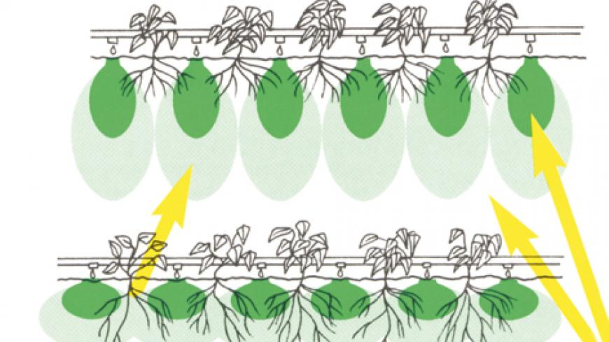 Tensiometric control in vegetable crops Drip irrigation