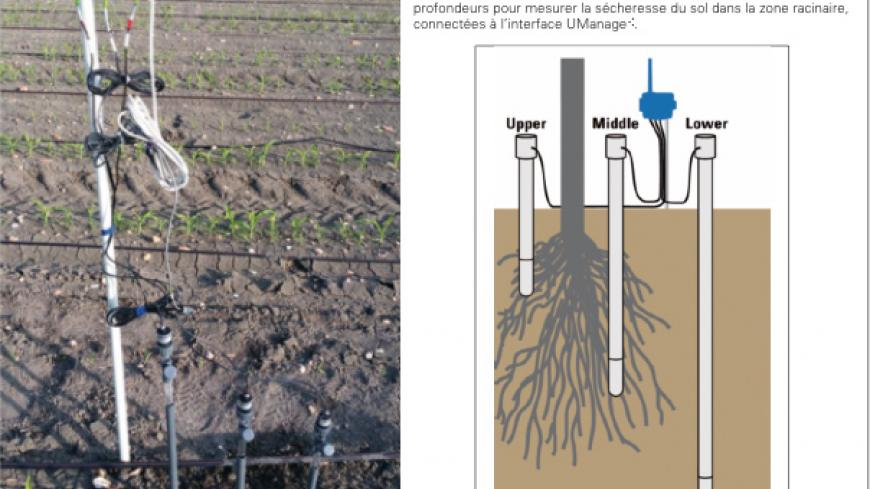 tensiometer installed at different depths to measure the soil moisture content in the root zone, connected to the UManage® interface