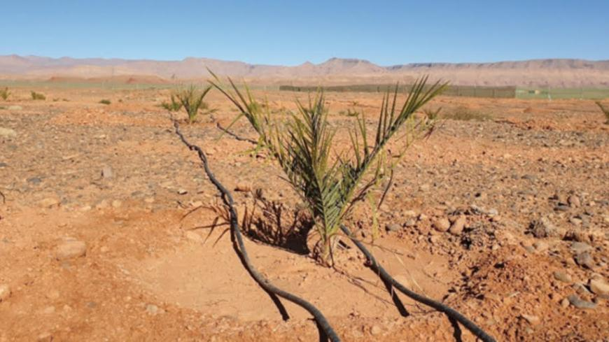 Design of a drip irrigation system for date palms