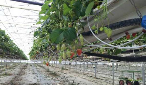 Using drip irrigation systems with hydroponic cultivation methods : A selection guide and advice for installation, implementation and maintenance