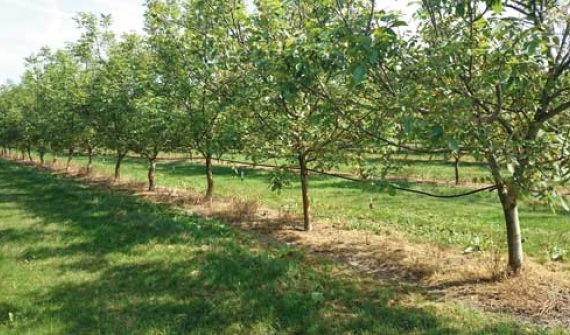 The Future of Orchard Irrigation